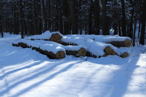 Pod śnieżną pierzynką