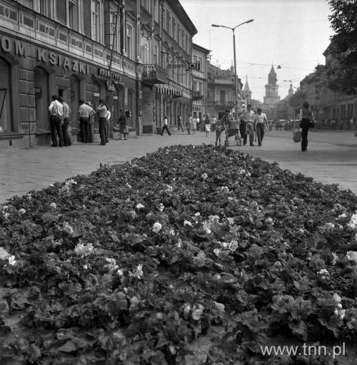 Rabatki z Krakowskiego Przedmieścia fot. E. Hartwig