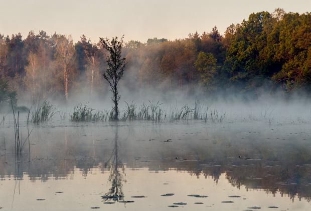 Spowity mgłą