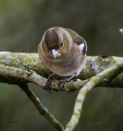 dzisiaj ptaszki troche zmarzly,jest zimno,wietrznie i snieznie:) #ptaki #zima #natura alicjaszrednicka-mondritzki