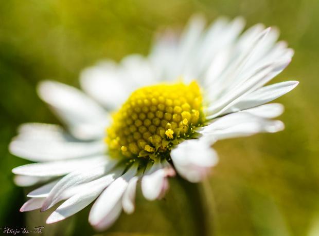 Wiosna,wiosna !! #natury #wiosna #kwiaty #ogrody #alicjaszrednicka