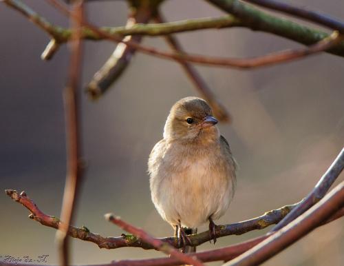 #ptaki #ogrody #dokarmianie #natura #przyroda #alicjaszrednicka