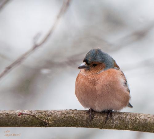 Grubszego jeszcze nie widzialam:)) #ptaki #ogrody #alicjaszrednicka #natura #przyroda