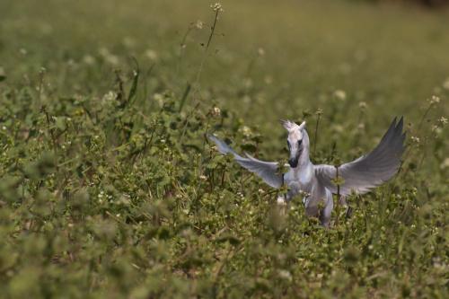Spotkany w trawie