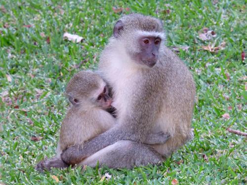Małpia rodzinka