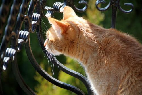 Nasze koty uwielbiaja być na balkonie :)