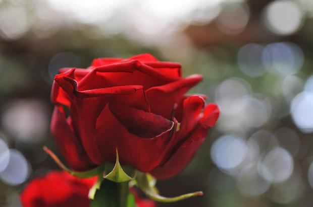 #kwiaty #ogrody #alicjaszrednicka