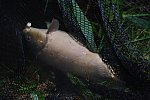 images82.fotosik.pl/614/4d7fa37f8bdb8f67m.jpg