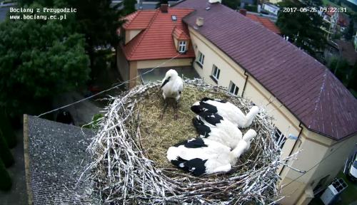 Najmłodszy bocianek jest chory. Zostanie wyjęty z gniazda i poddany badaniom.www.bociany.ec.pl