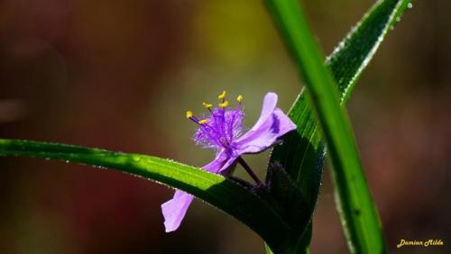 Poranny kwiat