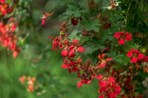 Flowers - Powers ;)