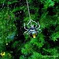 www.silverum.com.pl - #biżuteria #wisiorek #biżuteria #srebrna #bursztyn #sklep #internetowy #srebro #Gdańsk #artystyczna biżuteria #wyroby #jubilerskie #wisiorek #bizuteria #artystyczna #prezent na #biżuteria #wisiorek #srebrny...