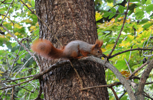 Czas na zwierza ode mnie :) Wiewiórka w parkowym zaciszu