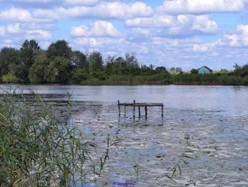 Jezioro Czaple - Sieciechów